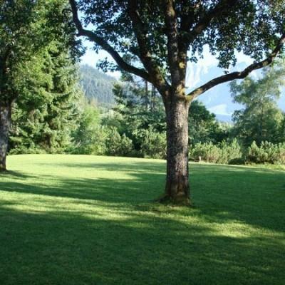 Privatgarten Grüntöne